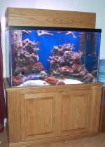 furniture quality aquarium stand plans